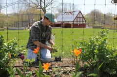 Oliver Gaffney planting veggies at Wakeman Town Farm
